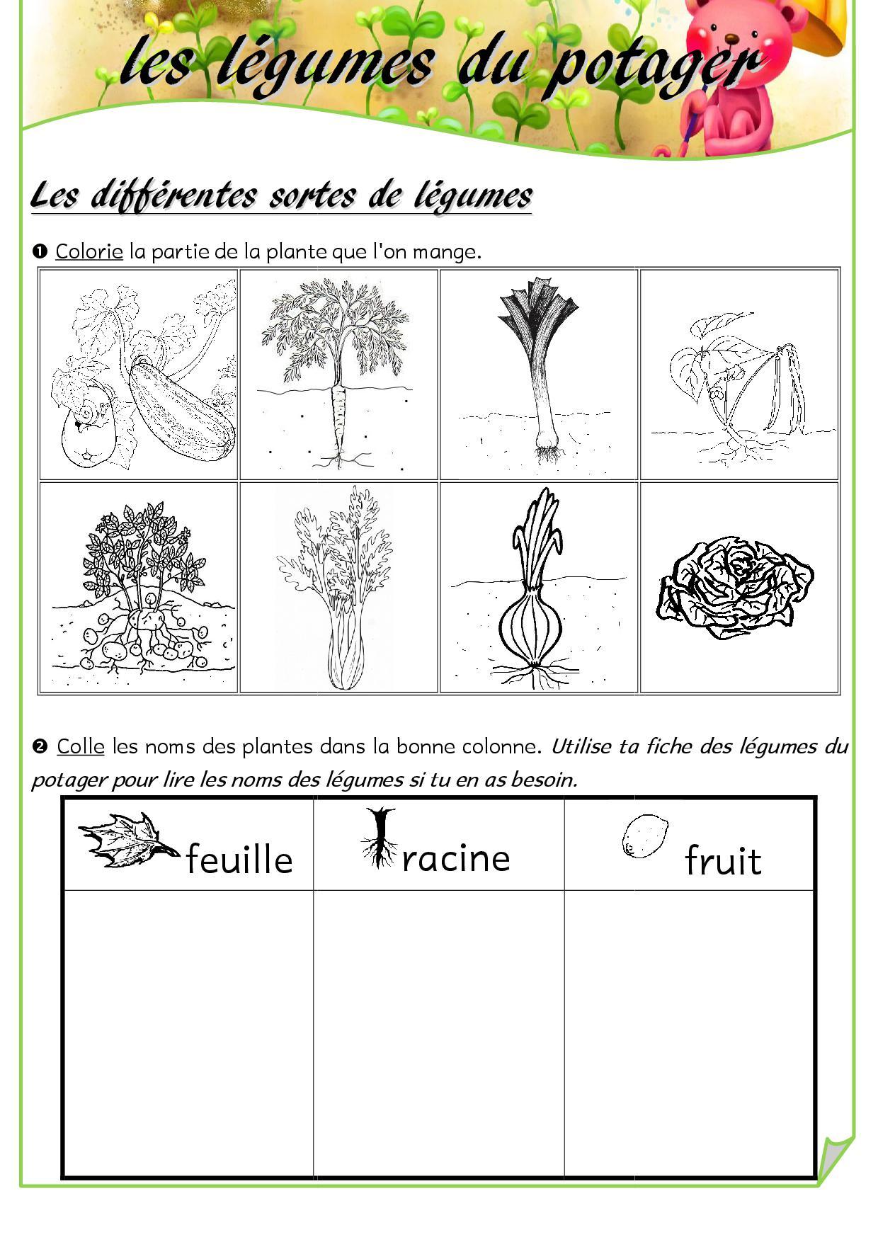 Les Légumes Du Potager Fiches De Préparations Cycle1 Cycle 2 Ulis