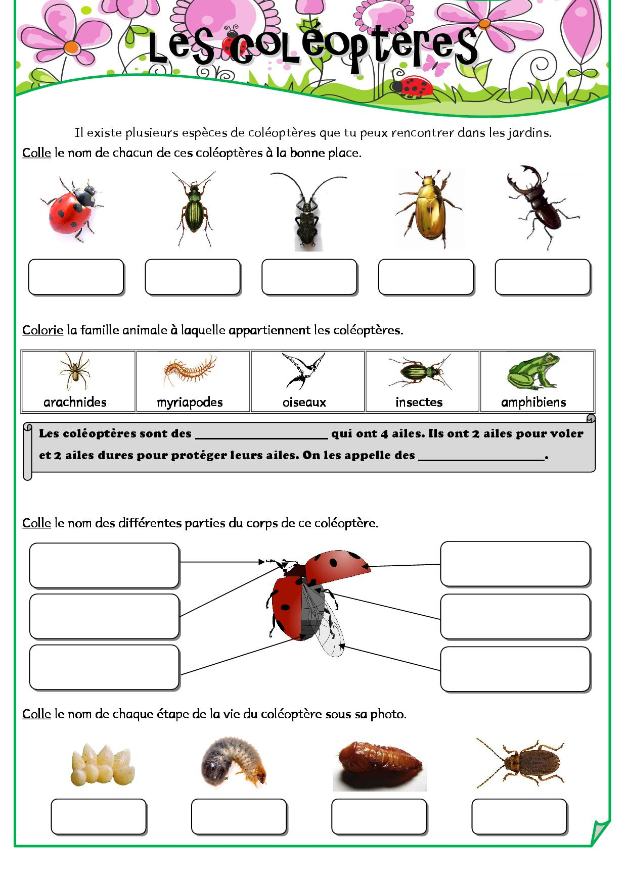 Jardinage fiches de pr parations cycle1 cycle 2 ulis for Technique jardinage